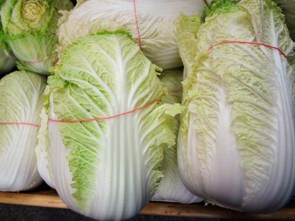 napa cabbage for kimchi
