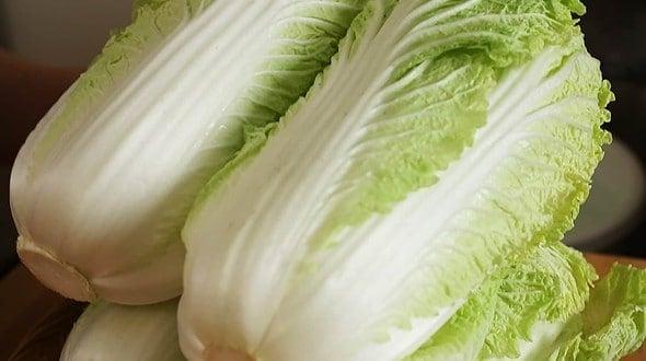 napa-cabbage (baechu: 배추)