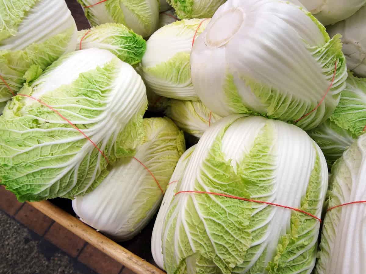 Napa cabbage (Baechu) - Korean cooking ingredients ...