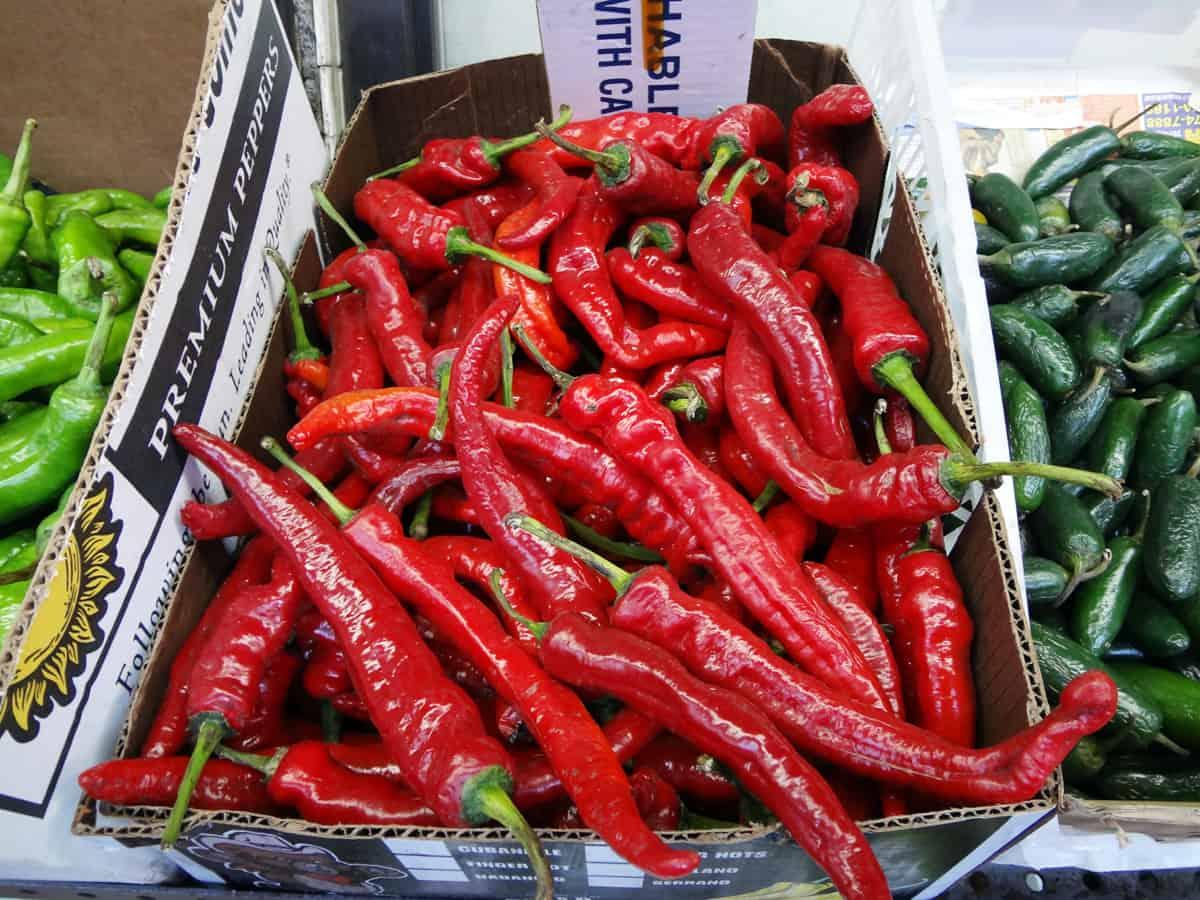 red chili peppers honggochu korean cooking