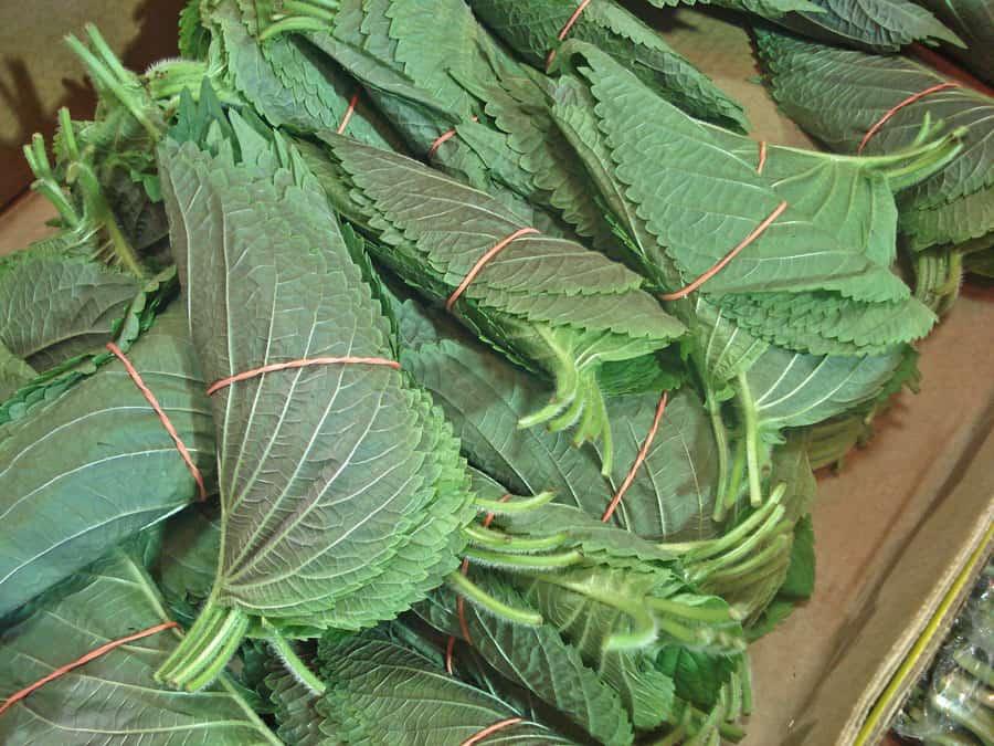 Perilla leaves (Kkaennip) - Korean cooking ingredients