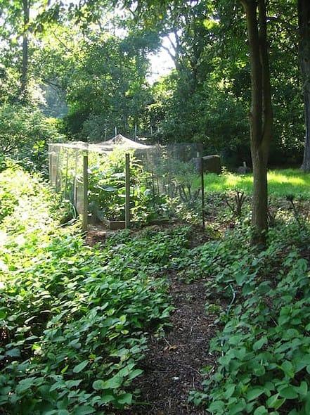 Melinda's garden