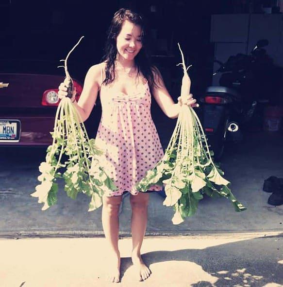 my radish harvest