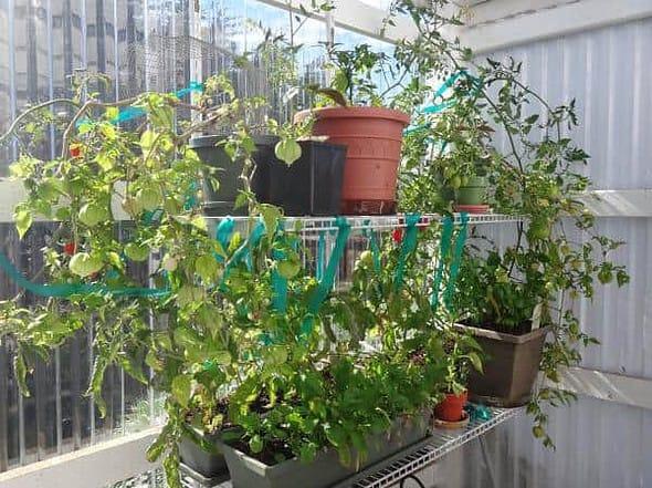 oksipak_garden