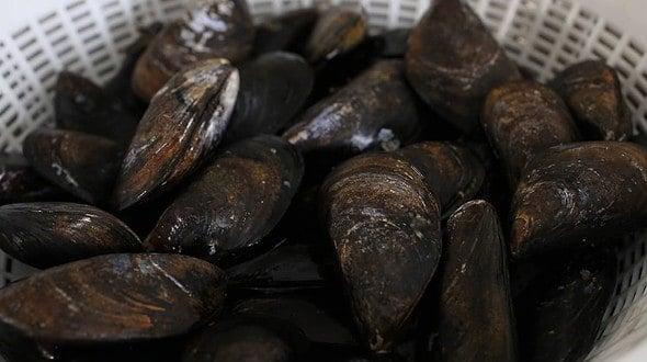 mussels (홍합: Honghap)