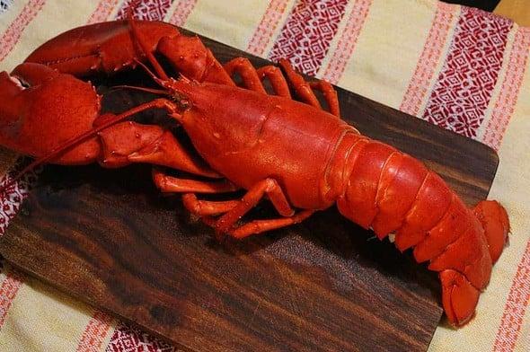 lobster (랍스터)