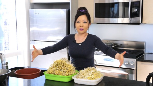 how to grow bean sprouts
